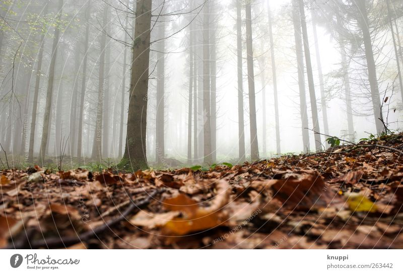 in the morning in the fog Relaxation Calm Agriculture Forestry Nature Plant Autumn Beautiful weather Fog Tree Leaf To dry up Brown Green White Cloud forest