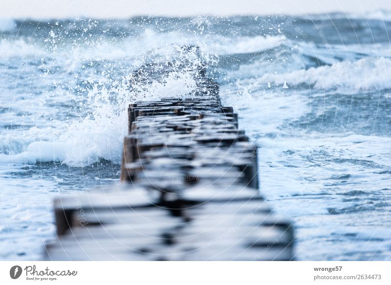 zippy Environment Nature Water Autumn Bad weather Wind Gale Rain Waves Coast Baltic Sea Maritime Wet Blue Brown Wooden stake Ocean Inject Swell Uninhibited