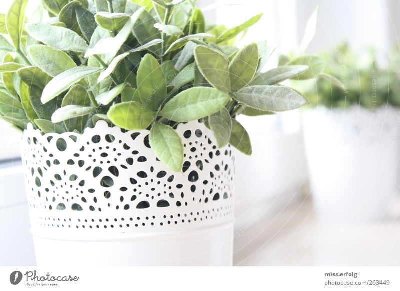 Nature Green White Beautiful Plant Leaf Spring Style Background picture Power Natural Growth Authentic Decoration Hope Simple