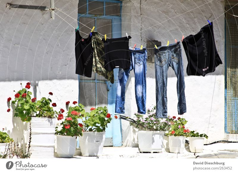 in the backyard House (Residential Structure) Clothing T-shirt Jeans White Dry Laundry Clothesline Clothes peg Hang up String Plant Flower Flowerpot Door