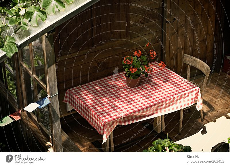 Red Summer House (Residential Structure) Bright Flat (apartment) Table Living or residing Chair Idyll Beautiful weather Cozy Terrace Checkered Tablecloth Wooden house Gardenhouse