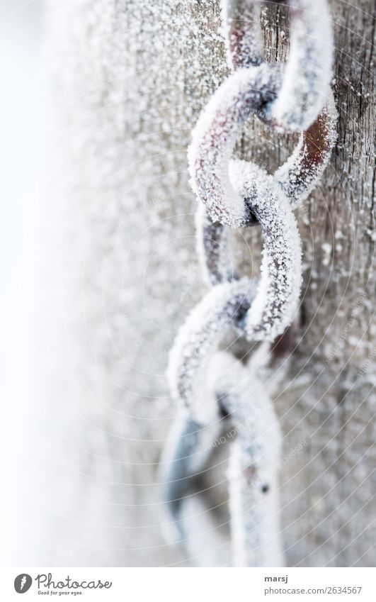 Frozen Chain Winter Ice Frost Chain link Metal Steel Cold White Ice crystal Colour photo Subdued colour Exterior shot Close-up Deserted Copy Space left Morning