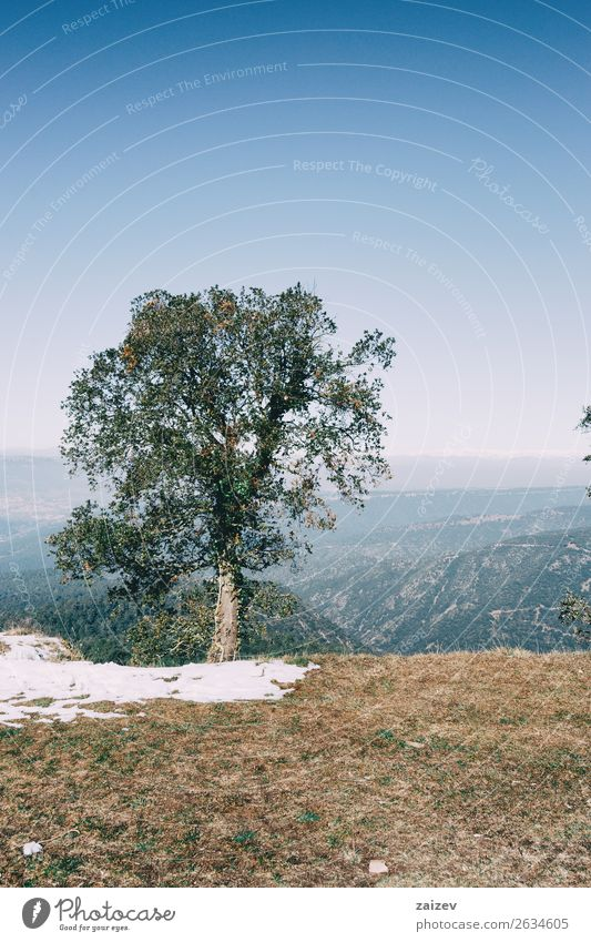 Landscape of an isolated tree with a little snow and the background unfocused pyrenees Design Beautiful Vacation & Travel Trip Adventure Winter Snow Mountain