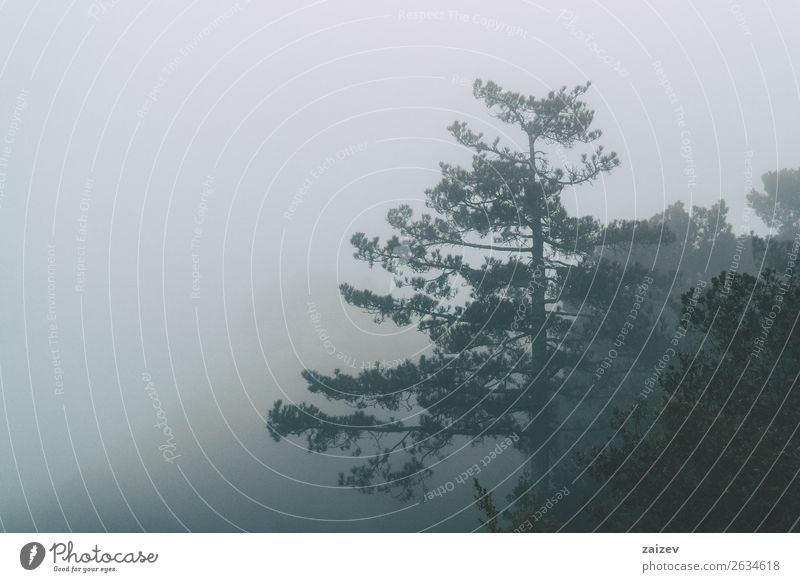 Mountain landscape of trees on a morning with a lot of fog Beautiful Vacation & Travel Winter Wallpaper Nature Landscape Plant Sky Autumn Weather Fog Snowfall