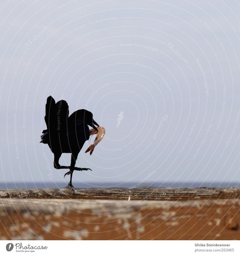 Ocean Joy Animal Bird Going Wild animal Animal foot Success Bridge Stand Feather Brave Jetty To feed Brash Beak