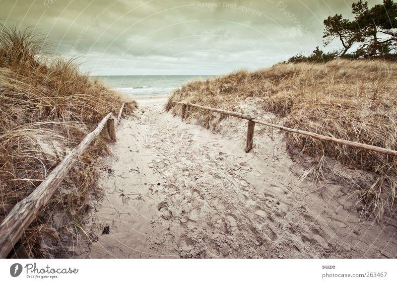 Sky Nature Water Ocean Winter Beach Clouds Loneliness Environment Landscape Grass Lanes & trails Sand Coast Horizon Weather