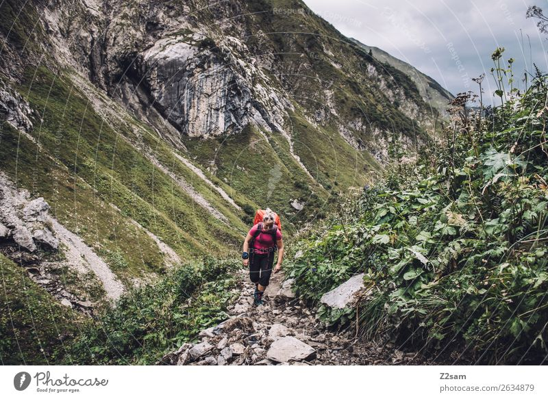 Woman crossing the Alps Vacation & Travel Adventure Mountain Hiking Young woman Youth (Young adults) 18 - 30 years Adults Nature Landscape Bushes Rock