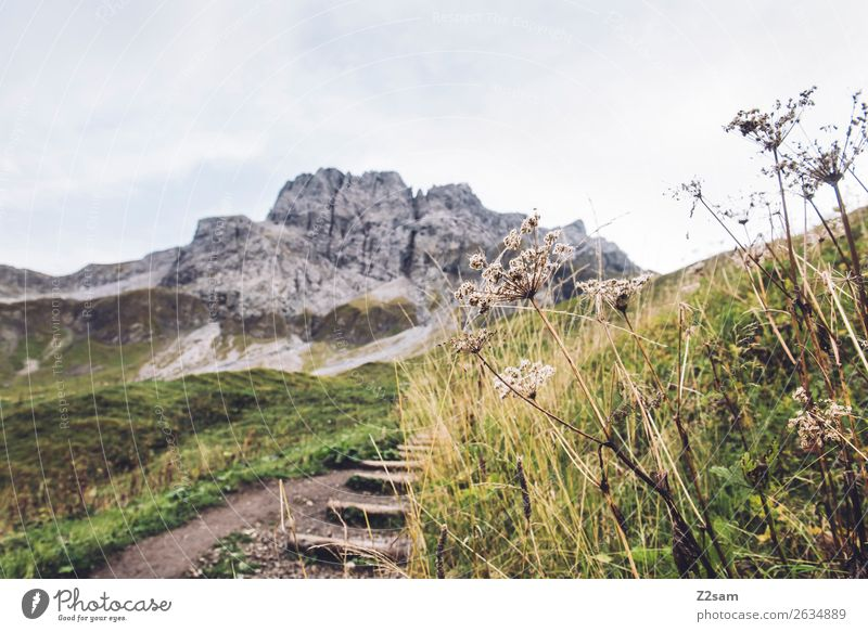 Ascent to the Mädlejoch Hiking Nature Landscape Autumn Beautiful weather Bushes Meadow Alps Mountain Gigantic Tall Green Adventure Relaxation Vacation & Travel