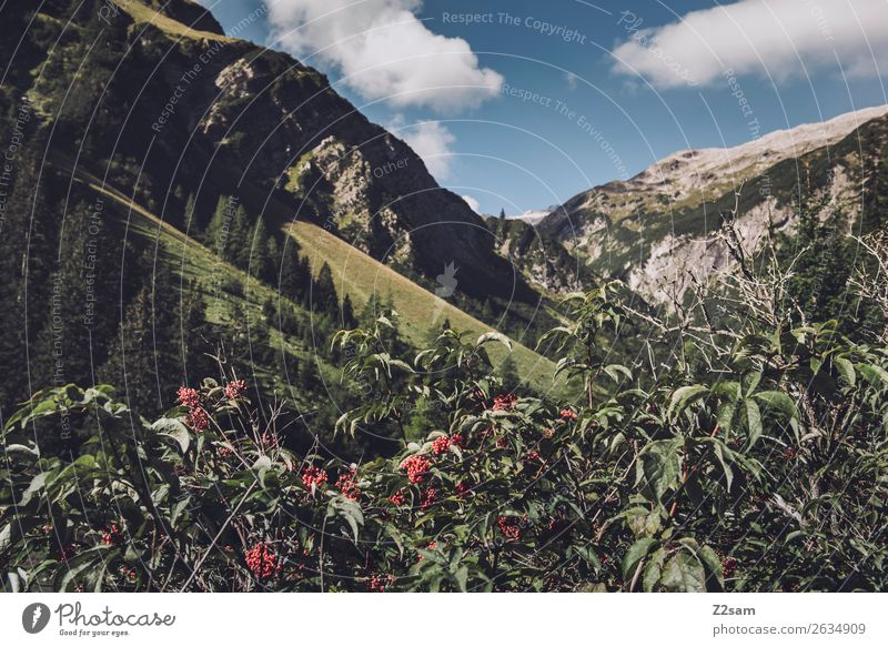 Alpine panorama Lechtaler Alps Adventure Hiking Nature Landscape Bushes Blossom Forest Mountain Esthetic Natural Blue Green Loneliness Idyll Sustainability