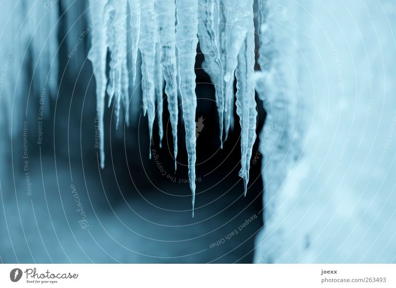 tattoo Nature Drops of water Winter Ice Frost Firm Fluid Cold Blue Black White Icicle Ice age Frozen Colour photo Subdued colour Exterior shot Deserted