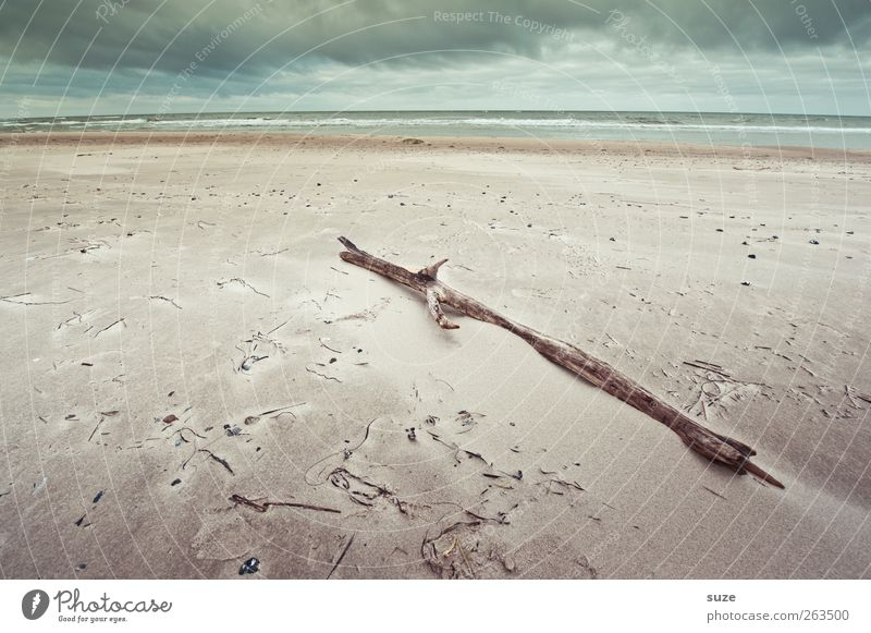 Sky Nature Water Ocean Winter Beach Clouds Loneliness Far-off places Environment Landscape Freedom Wood Sand Coast Air