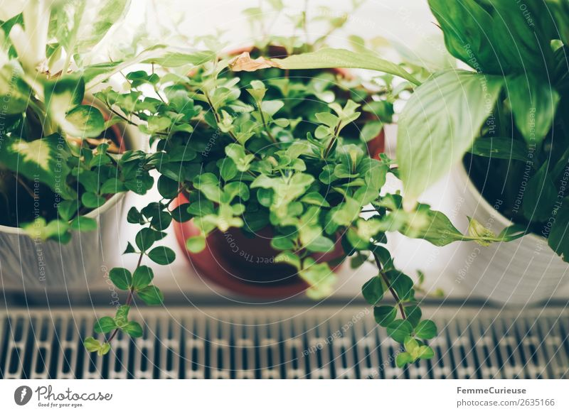 Green plants in the windowsill Plant Living or residing Decoration Foliage plant Flowerpot Window board Heater Homey Arrange Colour photo Interior shot