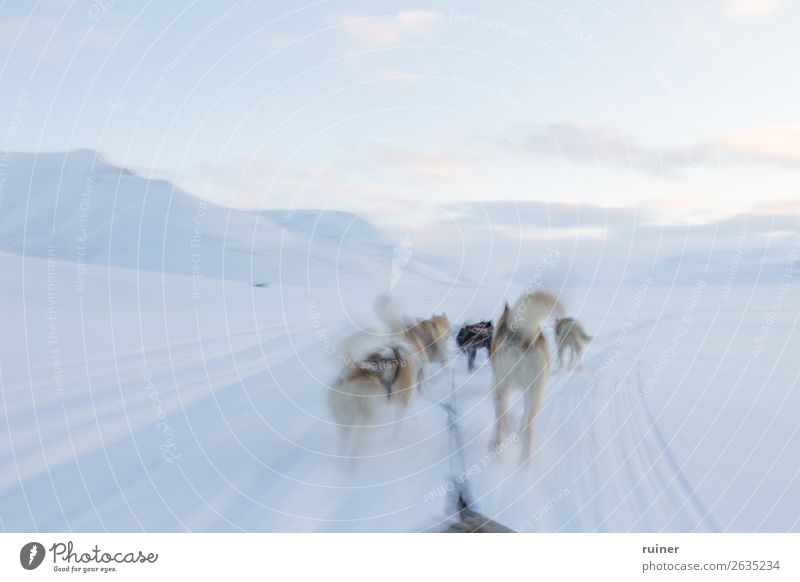 Dog sled tour at the polar circle Dog sledge Norway Spitzbergen The Arctic Mountain Snow Vacation & Travel Exterior shot Scandinavia North Cold Landscape