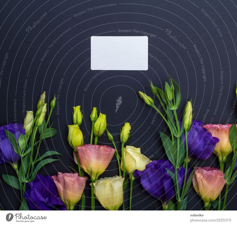 flowers Eustoma Lisianthus and empty paper card Nature Summer Plant Blue Green White Flower Leaf Black Yellow Love Blossom Natural Feasts & Celebrations