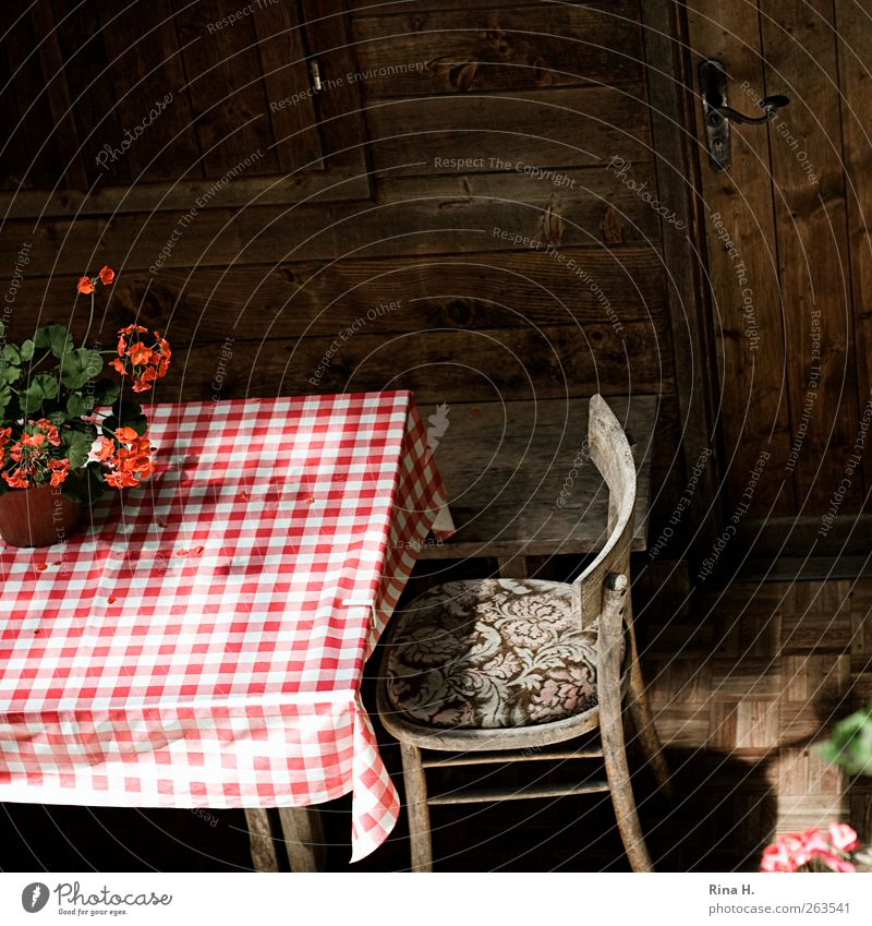 Diamond tablecloth (Idyll II ) Terrace Pot plant Red White Tablecloth Quaint Wooden hut Checkered Colour photo Exterior shot Deserted Light Shadow Wooden chair
