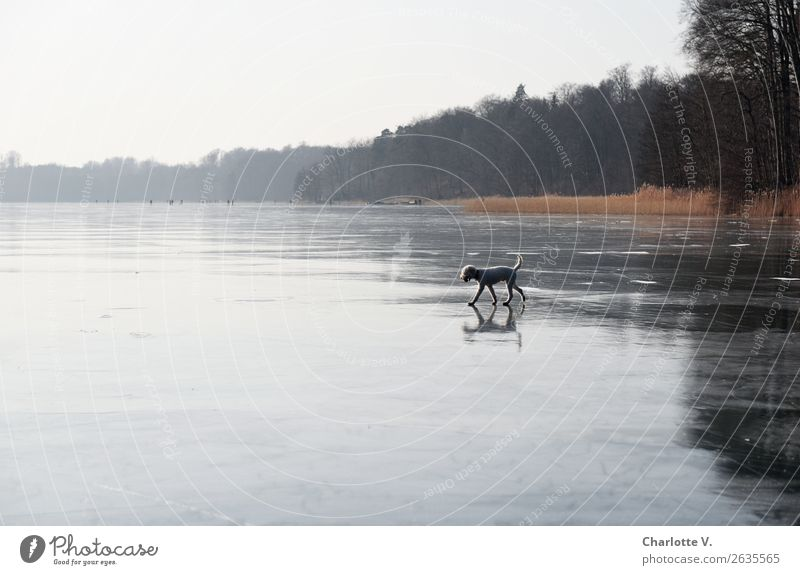 Nature Dog Water Landscape Tree Loneliness Animal Calm Winter Far-off places Cold Movement Lake Orange Gray Going