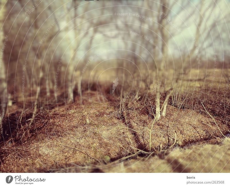 Nature Plant Winter Loneliness Forest Death Landscape Emotions Sadness Earth Field Photography Europe Bushes Federal eagle Pain