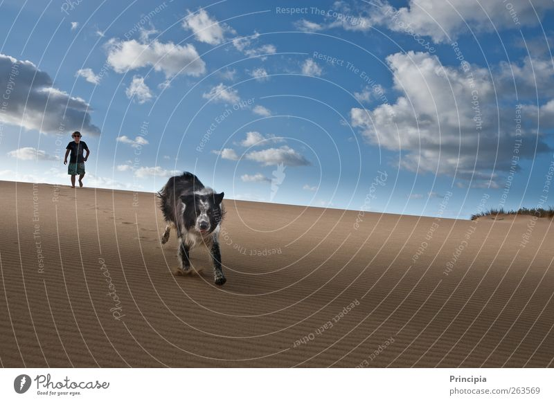 Sky Dog Vacation & Travel Summer Landscape Freedom Running Tourism Desert Dune Joie de vivre (Vitality)