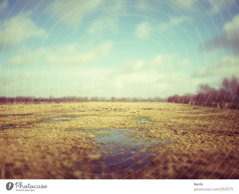 Sky Nature Blue Loneliness Yellow Gray Grass Sadness Dream Earth Germany Brown Dirty Photography Europe Transience