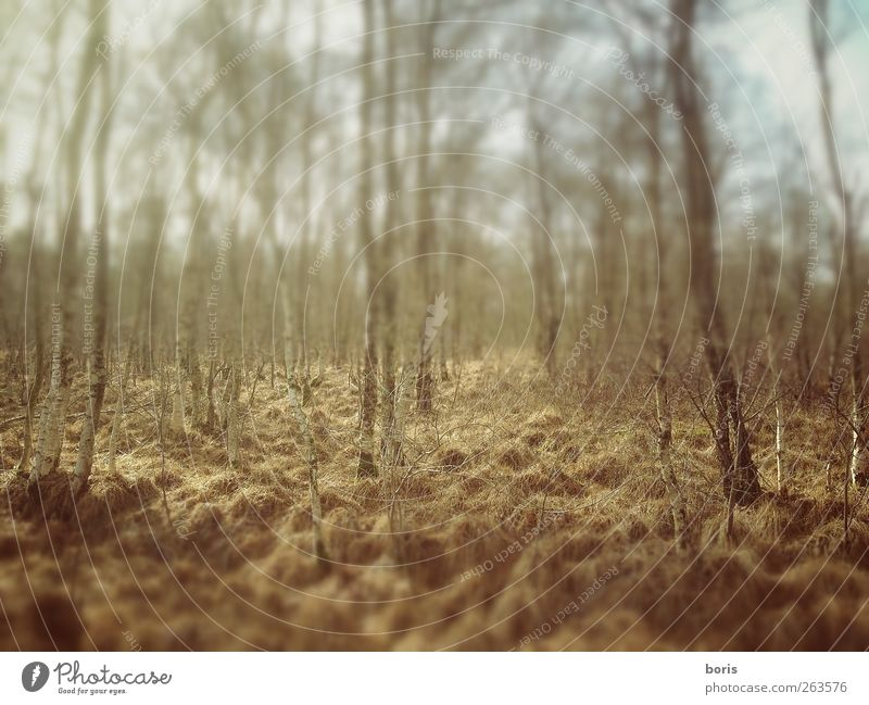 Ipweger Moor Nature Landscape Winter Forest Oldenburg Federal eagle Europe Deserted Brown Yellow Loneliness Transience Colour photo Subdued colour Exterior shot