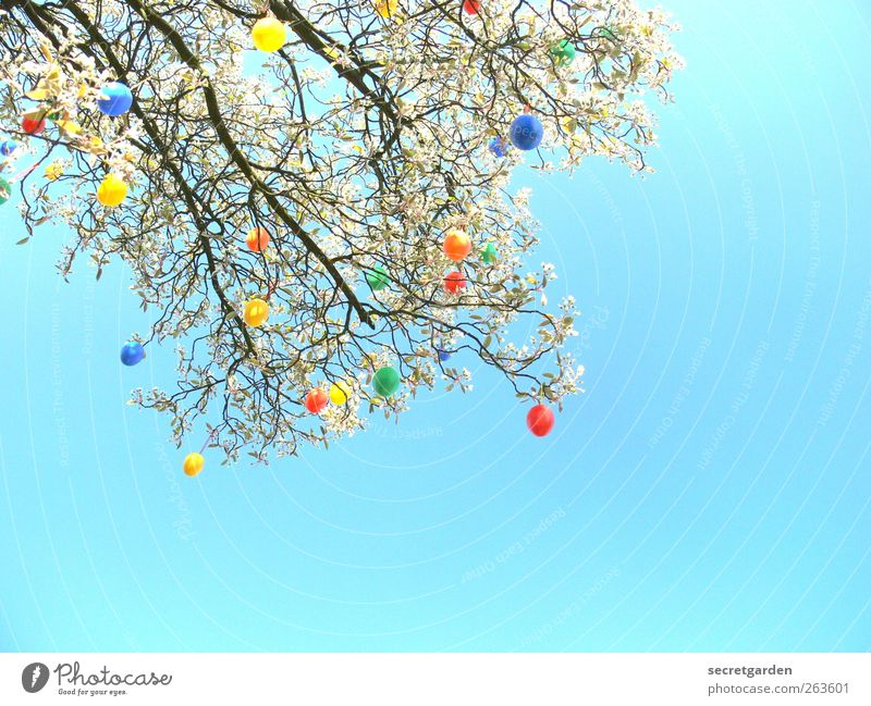 Nature Blue Green Tree Red Yellow Spring Garden Feasts & Celebrations Flat (apartment) Glittering Happiness Decoration Bushes Many Easter