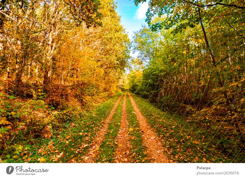 Autumn leaves falling on a forest trail in the fall Beautiful Sun Environment Nature Landscape Tree Leaf Park Forest Street Lanes & trails Bright Natural Yellow