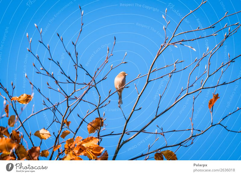 Single finch in a tree top in the fall Beautiful Life Man Adults Environment Nature Animal Sky Autumn Tree Park Forest Bird Sit Bright Small Natural Cute Wild