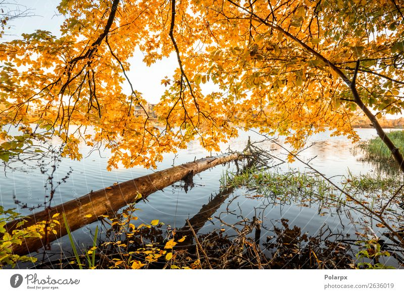 Wooden log hanging over a lake in the fall Sky Vacation & Travel Nature Colour Beautiful Landscape Red Tree Leaf Forest Autumn Yellow Environment Lake Brown