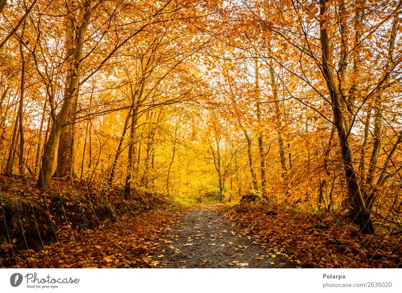 Orange autumn colors in the forest Beautiful Sun Environment Nature Landscape Autumn Tree Leaf Park Forest Street Lanes & trails Bright Natural Yellow Gold