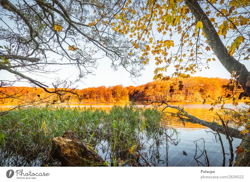 Colorful trees by a lake in the fall Sky Vacation & Travel Nature Colour Beautiful Green Landscape Red Tree Leaf Forest Autumn Yellow Environment Lake Brown