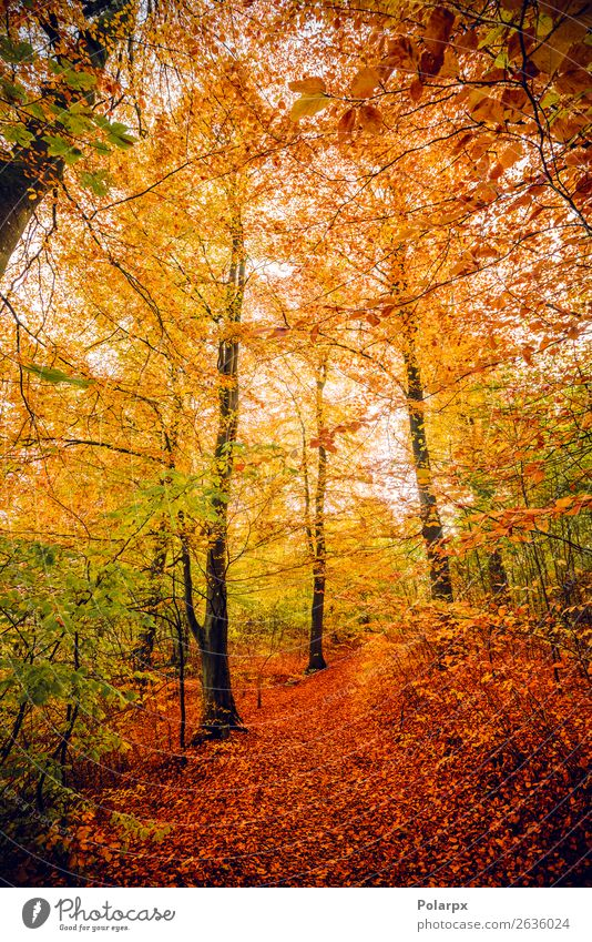 Autumn colors in the forest with trees Nature Colour Beautiful Green Landscape Red Sun Tree Leaf Forest Street Yellow Environment Natural Lanes & trails