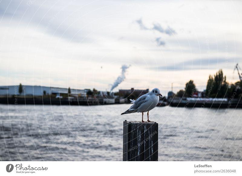 Bird as pile seater Environment Water Sun Autumn Coast North Sea Hamburg Town Port City Harbour Animal Wild animal Seagull 1 Observe Stand Wait Esthetic