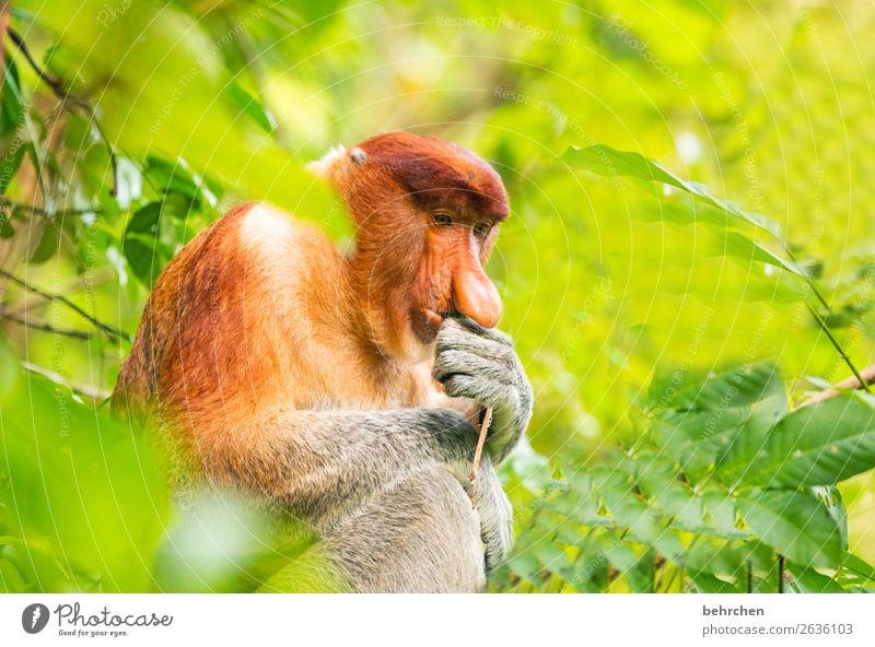 Cogito ergo sum Vacation & Travel Tourism Trip Adventure Far-off places Freedom Wild animal Animal face Pelt Monkeys Eurasian monkey 1 Observe Exceptional