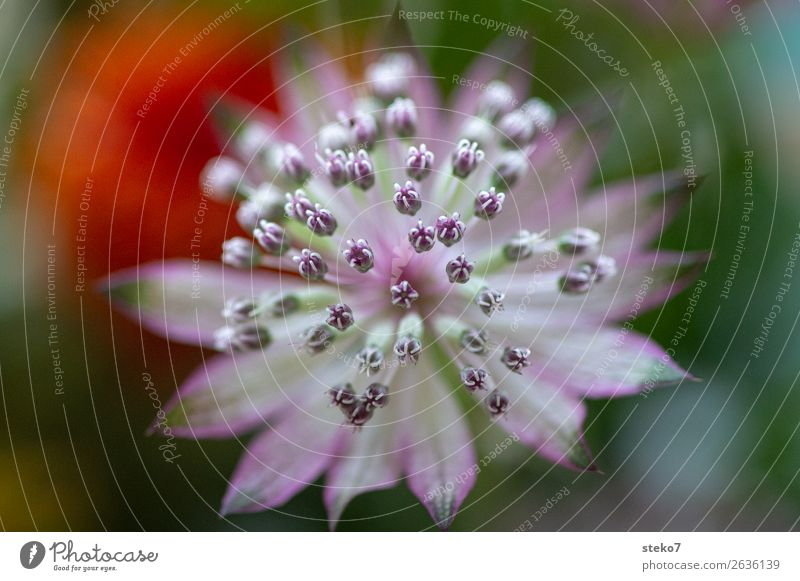 Green White Blossom Orange Pink Violet Delicate Symmetry Fragile Pistil