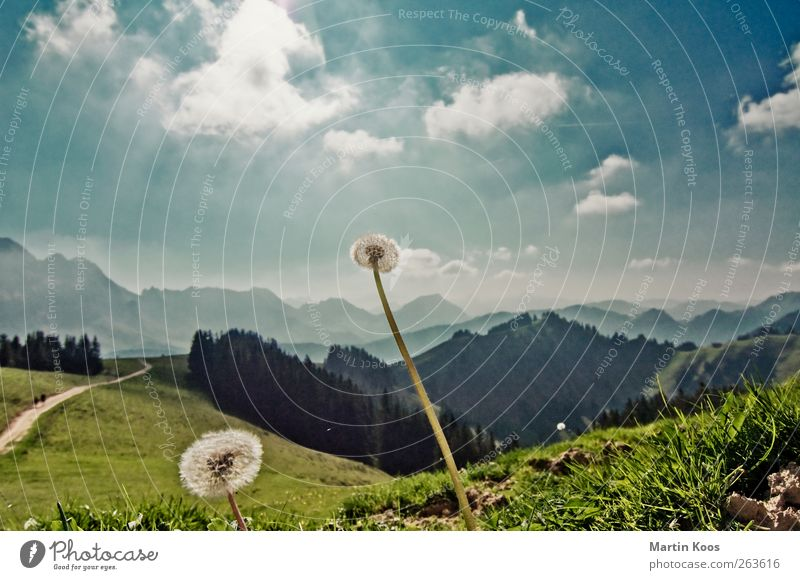 Wide Nature Landscape Sky Clouds Plant Flower Dandelion Meadow Hill Rock Mountain Lanes & trails To enjoy Illuminate Faded Hiking Esthetic Free Large Infinity