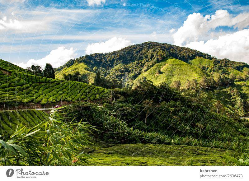 tea always goes Vacation & Travel Tourism Trip Adventure Far-off places Freedom Nature Landscape Sky Clouds Plant Leaf Agricultural crop Tea plants