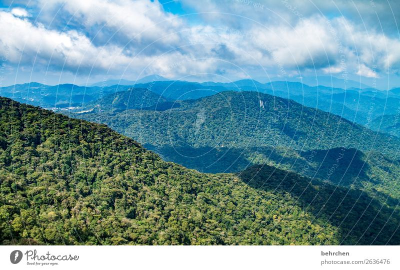 climate change | vital rainforest! Climate protection Climate change Fantastic Blue Gorgeous Clouds Bushes Environmental protection Leaf Sky Tree Field