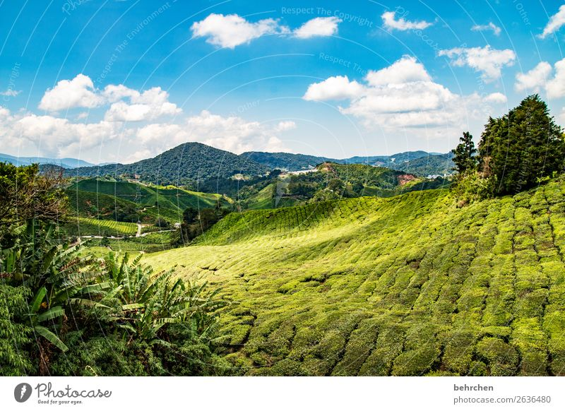 fairytale landscape Vacation & Travel Tourism Trip Adventure Far-off places Freedom Nature Landscape Sky Clouds Plant Tree Agricultural crop Tea plants