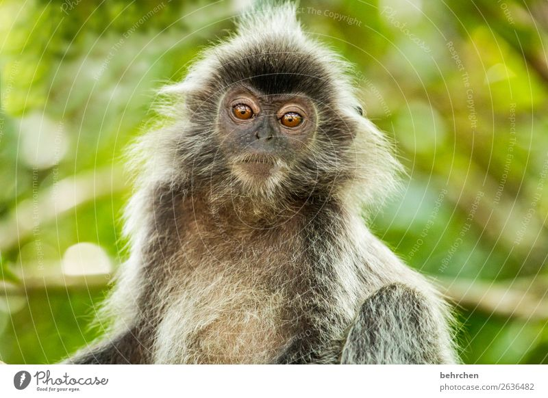 Vacation & Travel Tree Animal Far-off places Eyes Tourism Exceptional Freedom Trip Meditative Wild animal Adventure Fantastic Cute Curiosity Asia