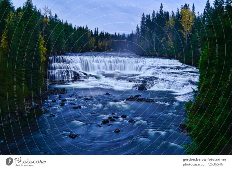 # Canada/irritating floods Nature Landscape Plant Elements Earth Water Sky Autumn Beautiful weather Tree Wild plant Forest River bank Threat Gigantic Natural