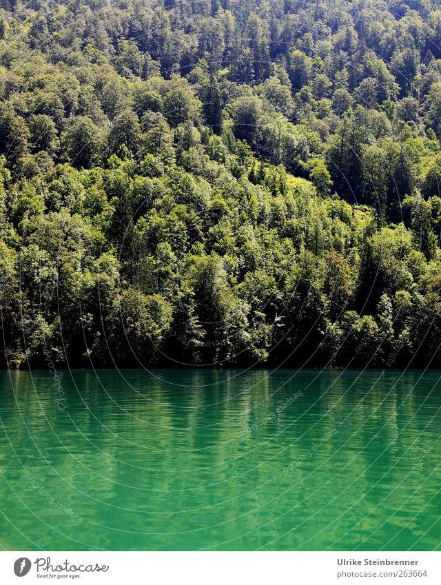 Water Green II Vacation & Travel Tourism Trip Summer Mountain Nature Landscape Plant Beautiful weather Tree Alps Canyon Lake Königssee Lakeside Fjord Illuminate
