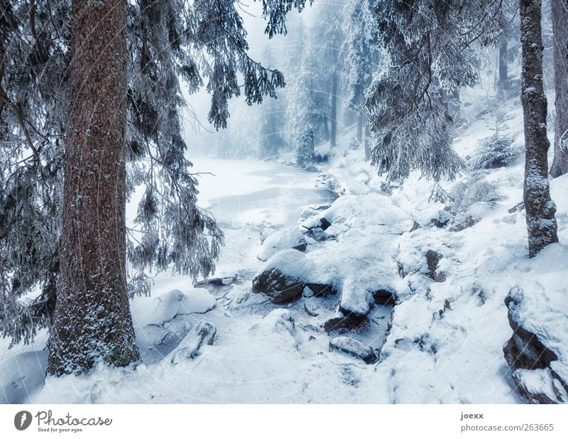 The one goes ... Nature Winter Fog Snow Tree Forest Lakeside Lanes & trails Large Cold Blue Brown Black White Idyll Mummelsee Lake Winter forest Colour photo
