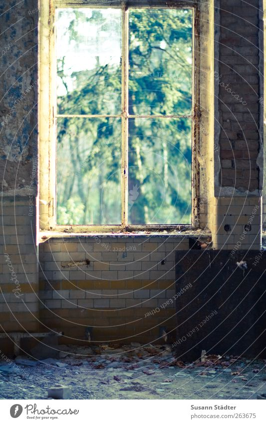 a window opens somewhere else... Art Nature Garden House (Residential Structure) Ruin Wall (barrier) Wall (building) Window Monument Old Vandalism Sanitarium