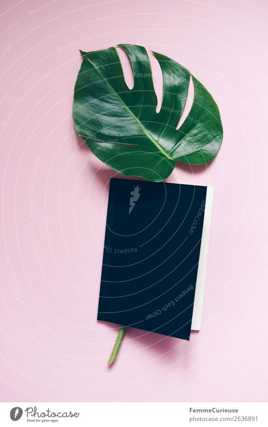 Stem and leaf of a monstera lying in a book Stationery Paper Creativity Monstera Book Pink Black Design Modern Green Leaf Stalk Plant Part of the plant