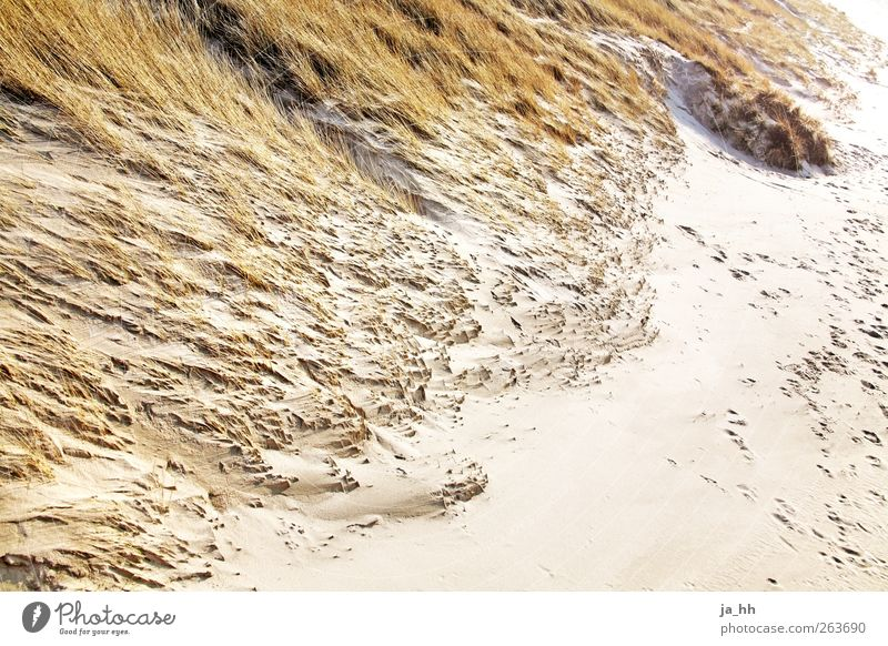 Vacation & Travel Ocean Beach Relaxation Autumn Sand Wind Hiking To go for a walk North Sea Gale Sylt High tide Low tide Tide Marram grass