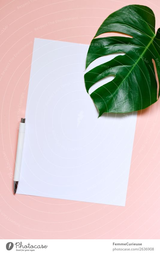Paper & the leaf of a monstera on salmon-colored background Stationery Piece of paper Creativity Monstera Plant Part of the plant Ballpoint pen Pink