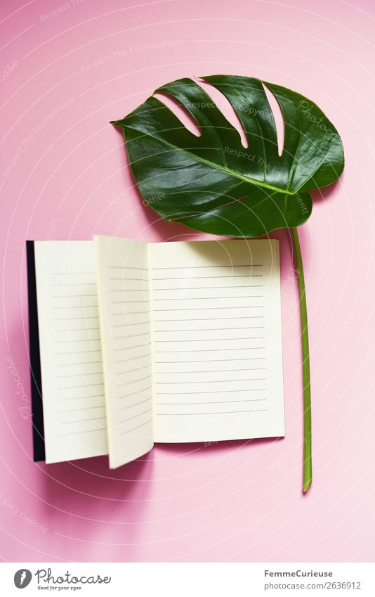 Stem and leaf of a monstera lying next to a book Nature Communicate Reading Write Book Notebook Pink White Monstera Leaf Stalk Plant Part of the plant Modern
