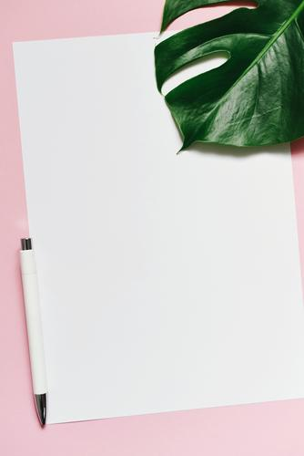 White sheet of paper & the leaf of a monstera on pink background Nature Stationery Paper Piece of paper Creativity Design Structures and shapes Ballpoint pen A4