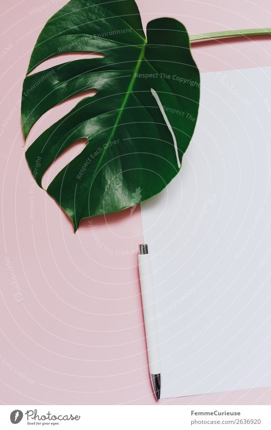 White sheet of paper & the leaf of a monstera on pink background Stationery Paper Piece of paper Creativity Monstera Plant Part of the plant Foliage plant