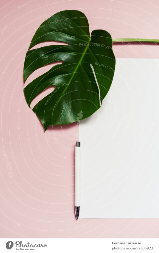 White sheet of paper & the leaf of a monstera on pink background Lifestyle Stationery Paper Piece of paper Creativity Monstera Pink Green Ballpoint pen Empty
